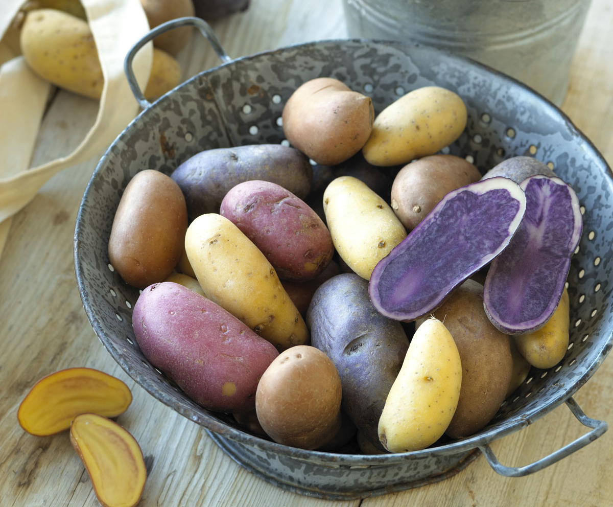 Multi Colored Potatoes